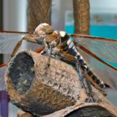 Insect on display